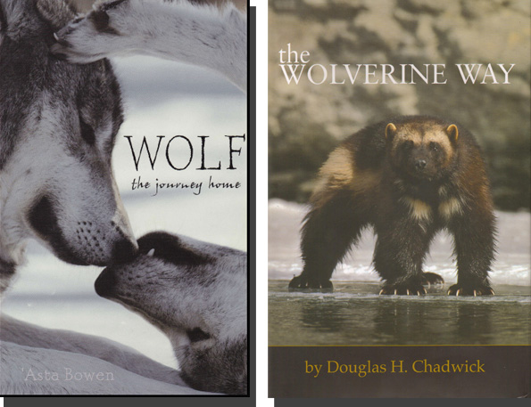 Wolves And Wolverines Powder Canada