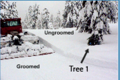 Photo A - Groomed vs. Ungroomedtree1.png Snow Cat creating groomed snow & Tree 1 in ungroomed area.